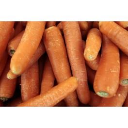 Gulerødder 10 Sække.