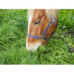 Horsemax Solfaxi 10kg