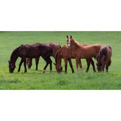 HorseMax 60 græsfrø 10kg